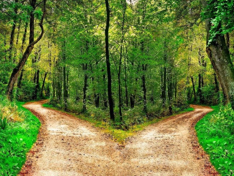 Path in the forest splitting into two separate directions